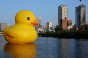 Giant rubber 15 x 18m duck floating in Sydney Harbour